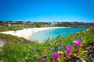 portoscuso, spiaggia di porto paglietto, fiori di calsera mare vacanze sardegna bed and breakfast sa cruxitta