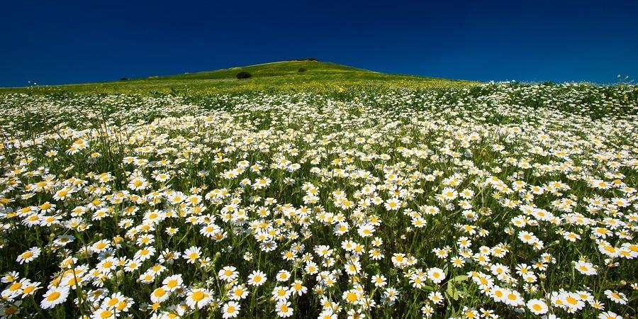 Primavera Sulcis Iglesiente natura escursioni passeggiate aria aperta bed&breakfast sa cruxitta